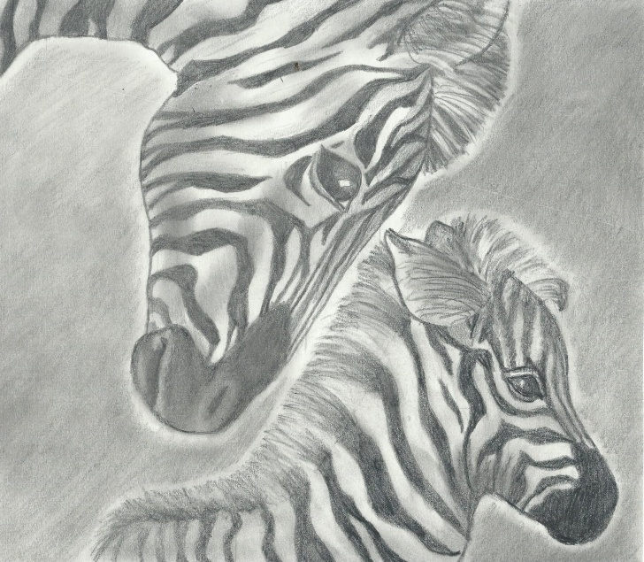 Fantastic Zebra Pencil Drawing Easy A Pencil Drawing Of A Zebra And Her Baby. All My Drawings Are For Photo
