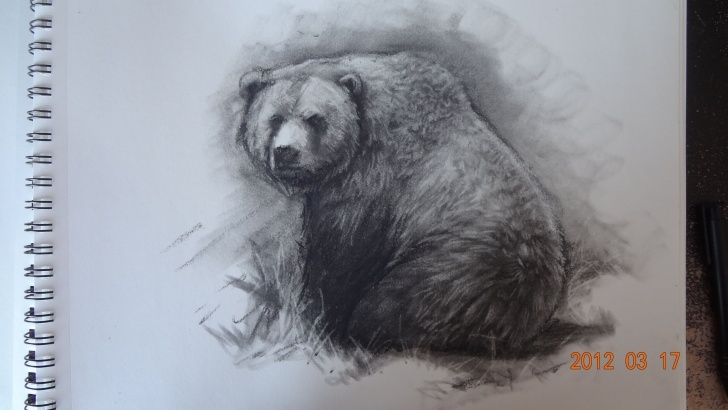 Bear Pencil Drawing