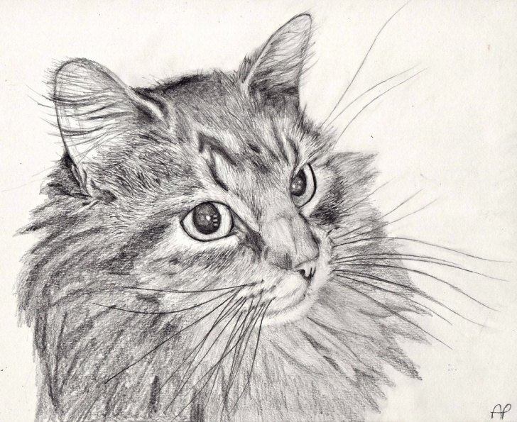 Fascinating Cat Pencil Art Lessons Cat Drawing Pencil Art | Http://lomets Pictures