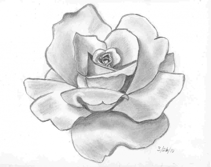 Fascinating Charcoal Flower Drawings Easy Rose Charcoal Drawings Of Flowers Pic