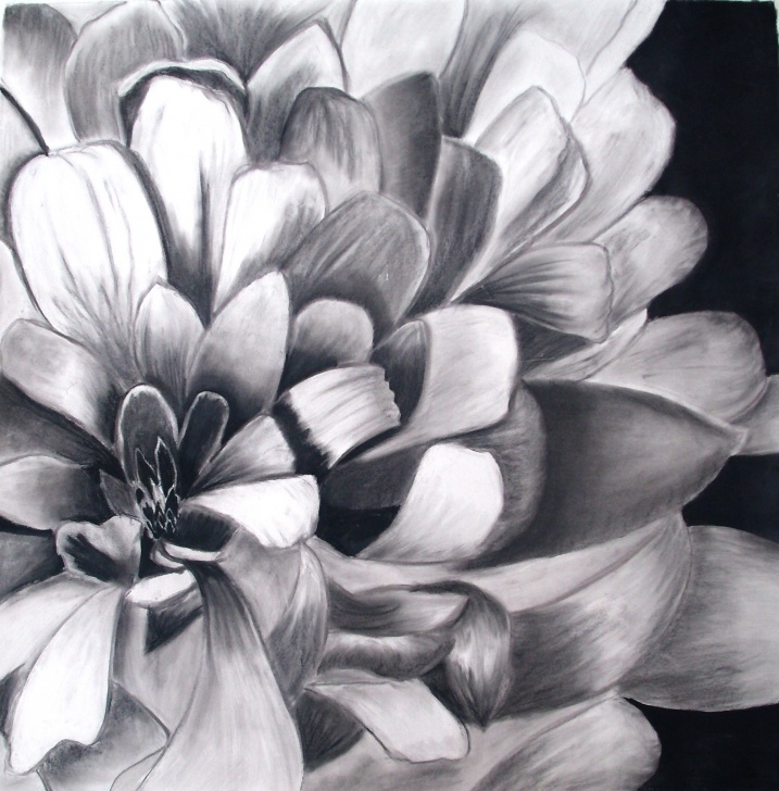 Fascinating Charcoal Flower Drawings Simple Charcoal Paintings Search Result At Paintingvalley Photo
