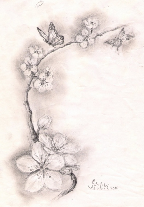 Fascinating Cherry Blossom Pencil Drawing Simple Cherry Blossom Pencil Drawing At Paintingvalley | Explore Photo