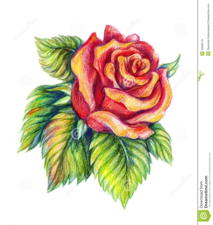 Fascinating Colour Pencil Sketches Flowers Techniques for Beginners Flower Color Pencil Drawings And Colour Pencil Drawings Flowers Picture