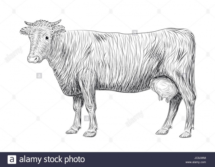 Fascinating Cow And Calf Pencil Drawing Ideas Cow And Calf Sketch At Paintingvalley | Explore Collection Of Picture