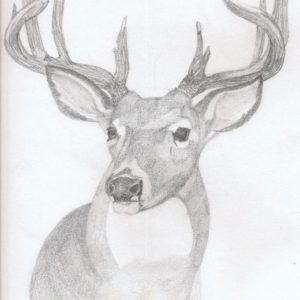 Fascinating Deer Pencil Drawings Simple Deer Drawings In Pencil | Art: Deer Rough Sketch In Pencil Photos