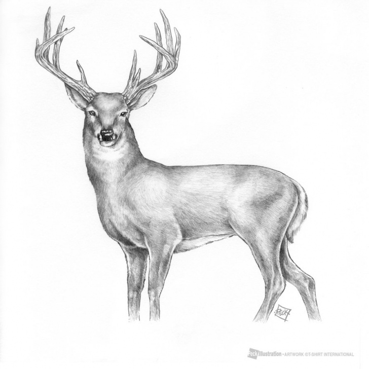 Fascinating Deer Pencil Sketch for Beginners Mule Deer Pencil Sketch And Deer Drawings Pencil - Melo.yogawithjo Picture
