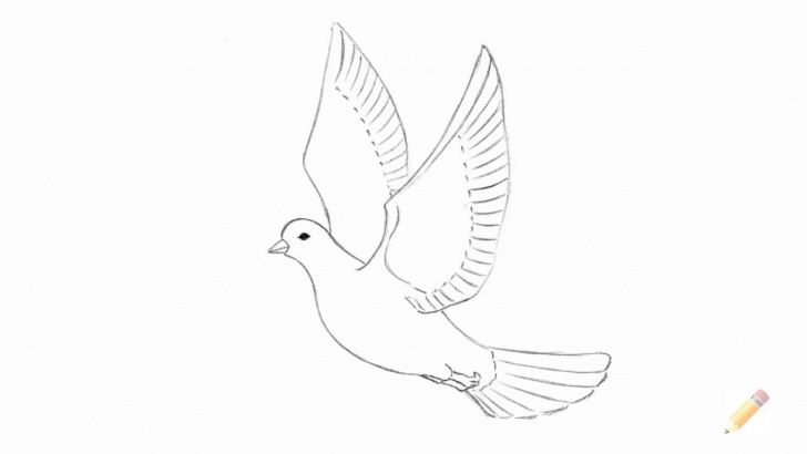 Fascinating Dove Drawings Pencil for Beginners How To Draw A Dove Picture