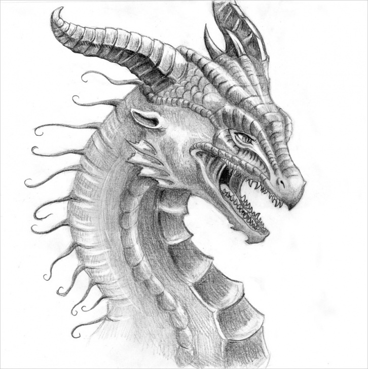 Fascinating Dragon Pencil Art Courses 21+ Realistic Dragon Drawings | Free & Premium Creatives Image