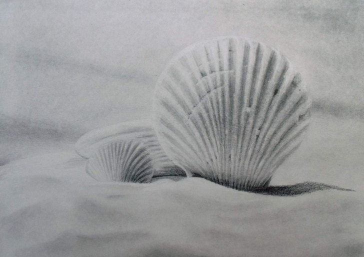 Fascinating Drawings Of Shells In Pencil Ideas How To Draw Seashells — Online Art Lessons Photo