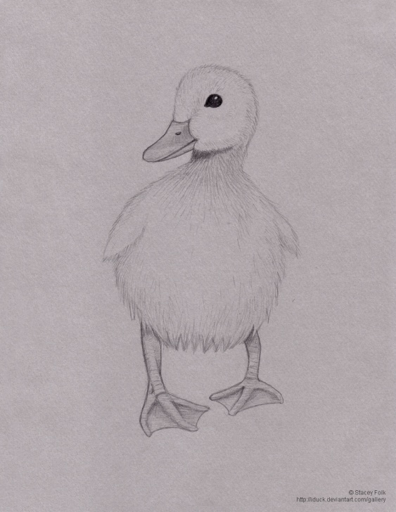 Fascinating Duck Pencil Drawing Easy Duck Pencil Drawing At Paintingvalley | Explore Collection Of Pictures