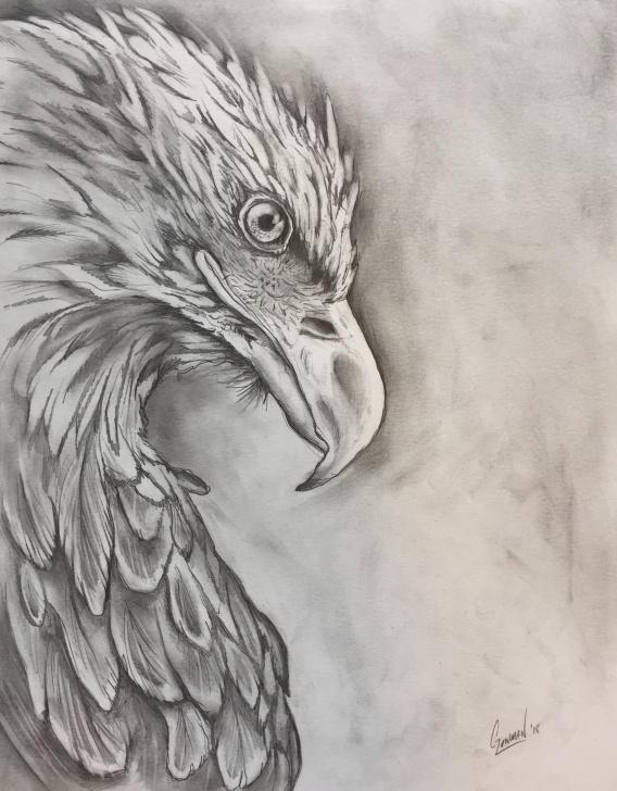 Fascinating Eagle Pencil Art Courses Eagle Pencil Drawing - Album On Imgur Photo