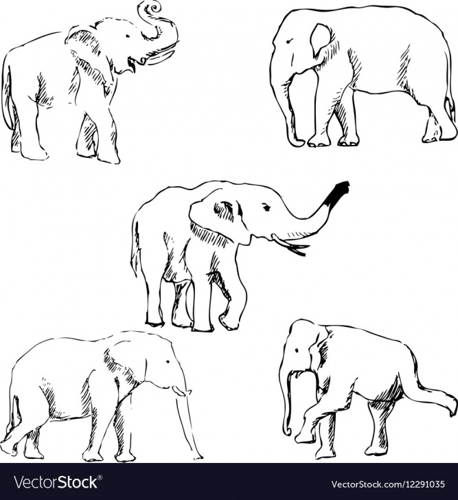 Fascinating Elephant Pencil Drawing Easy Elephants A Sketch By Hand Pencil Drawing Vector Image Pics