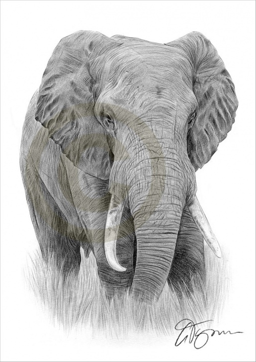 Fascinating Elephant Pencil Drawing Step by Step Elephant Pencil Drawing Print - Elephant Art - Artwork Signed By Artist  Gary Tymon - 2 Sizes - Ltd Ed 50 Prints Only - Pencil Portrait Photos
