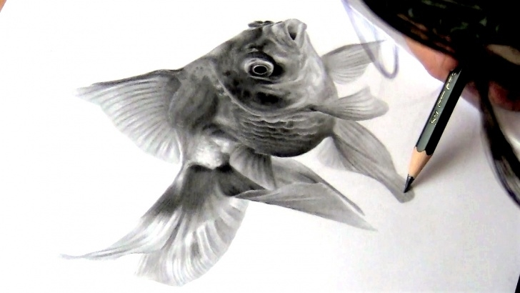 Fascinating Fish Pencil Drawing Tutorial Drawing A Gold Fish || Graphite Pencil Drawing Image