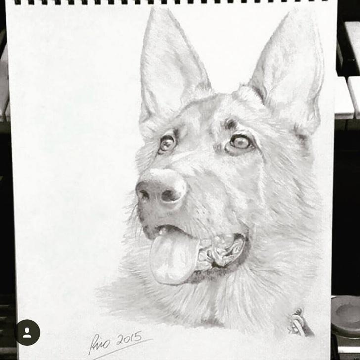 Fascinating German Shepherd Drawings In Pencil Techniques for Beginners Pencil Drawing German Shepherd Dog — Steemit Pictures