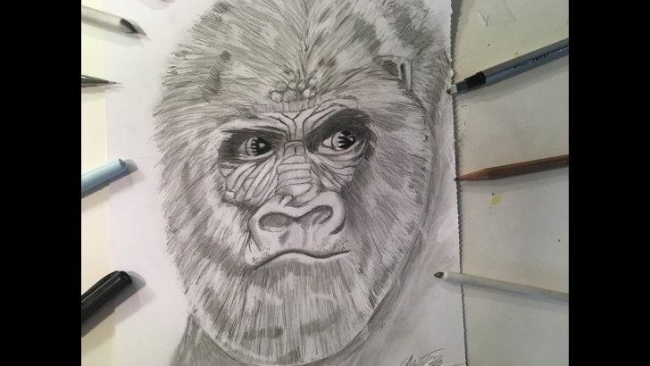 Fascinating Gorilla Pencil Drawing Techniques How To Draw A Realistic Gorilla Head (2017)- Pencil Drawing- Zartwork Photos
