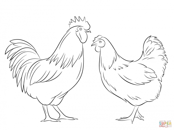 Fascinating Hen Pencil Drawing Techniques for Beginners Hen Drawings Outline - Google Search | Rooster Hen | Chicken Pics