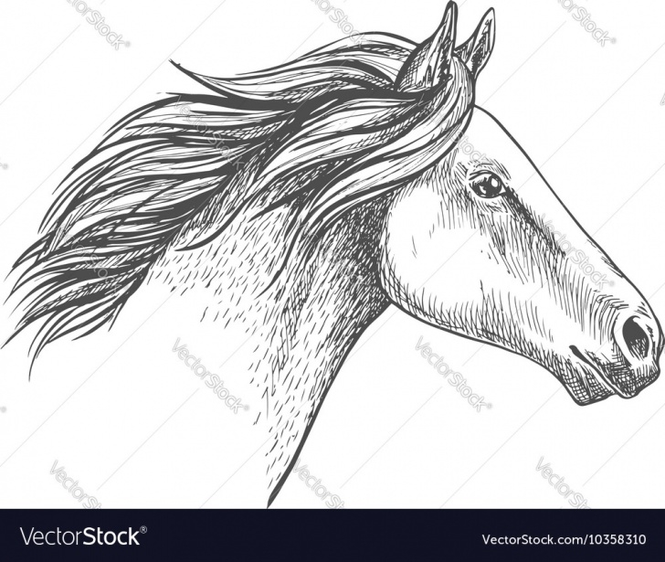 Fascinating Horse Pencil Drawing Ideas White Horse Pencil Sketch Portrait Image