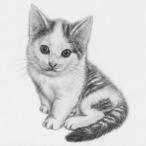 Fascinating Kitten Pencil Drawing Ideas Drawn Kitten Pencil Drawing - Pencil    Cats   Kitten Drawing Pic