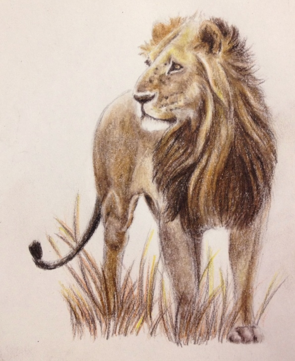 Fascinating Lion Colored Pencil Drawing Ideas African Lion In Colored Pencil. | Art - Colored Pencil | Animal Images