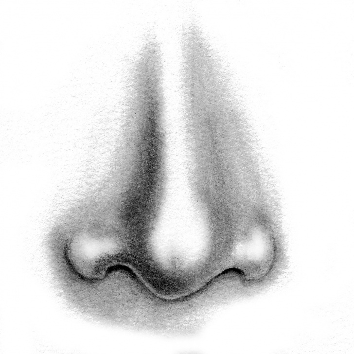 Fascinating Nose Pencil Drawing Lessons Nose Pencil Drawing At Paintingvalley | Explore Collection Of Pictures
