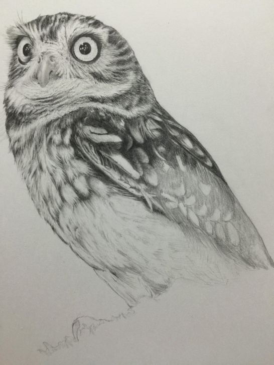 Fascinating Owl Pencil Drawing Ideas Pencil Drawing - Little Owl On Behance Images