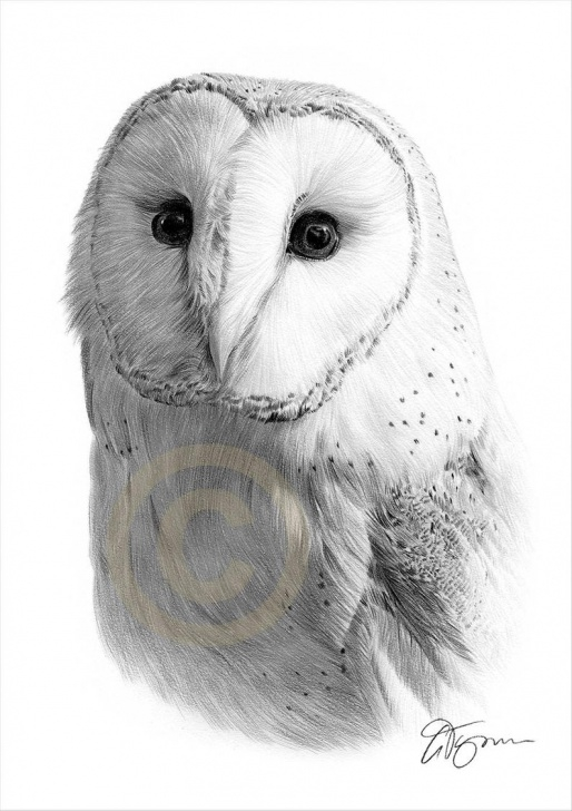 Fascinating Owl Pencil Drawing Simple Barn Owl Pencil Drawing Print - Wildlife Art - Artwork Signed By Artist  Gary Tymon - 2 Sizes - Ltd Ed 50 Prints Only - Bird Pencil Portrait Images