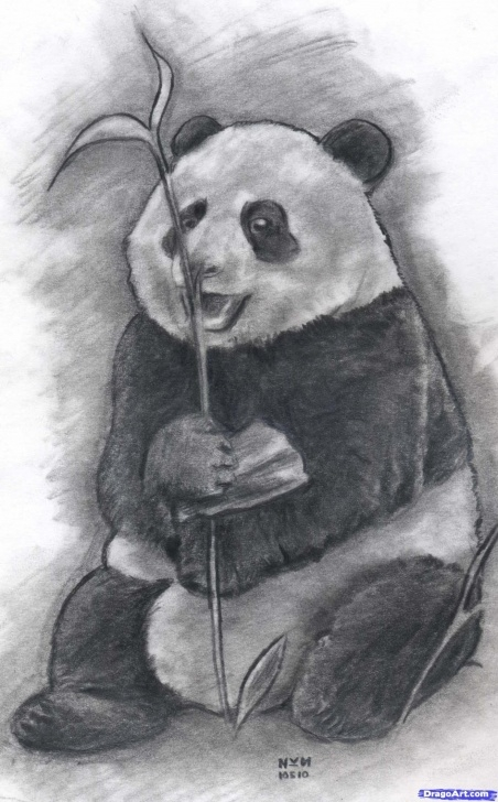 Fascinating Panda Drawing Realistic Techniques for Beginners How To Draw A Realistic Panda, Draw Real Panda, Step By Step Photo