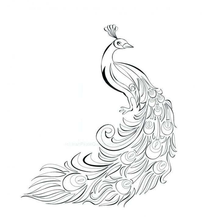 Fascinating Peacock Pencil Drawing Free Peacock Drawing Easy – Axionsheet.co Photos