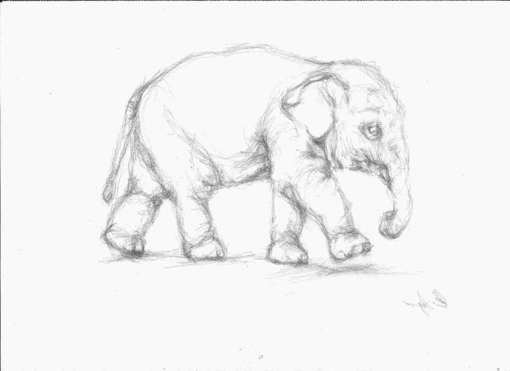 Fascinating Pencil Art Animals Easy Pencil Drawing Images Animals At Paintingvalley   Explore Photo