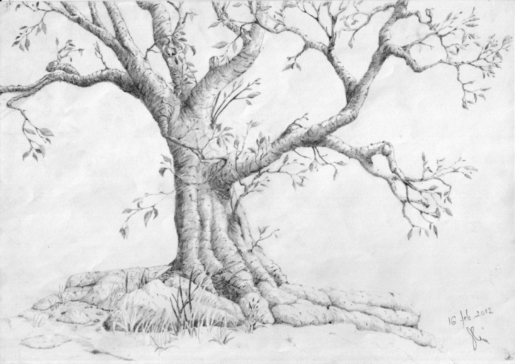 Fascinating Plant Pencil Drawing Easy Pencil Drawing Of A Tree 1000+ Images About <B>How To Draw Realistic Picture