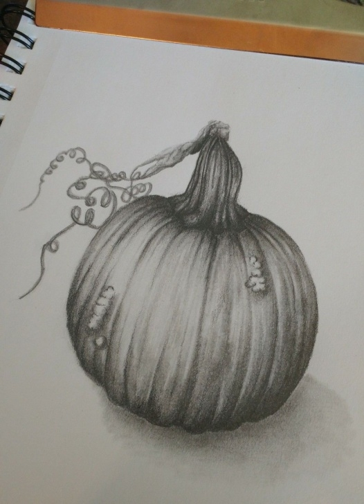 Pumpkin Pencil Drawing