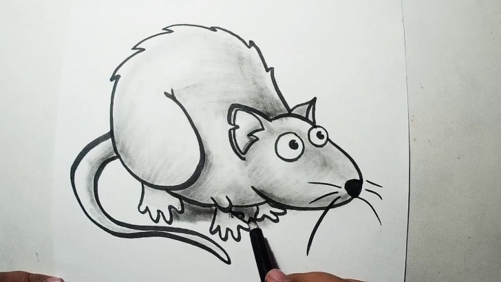 Fascinating Rat Pencil Drawing Free How To Draw A Rat || Pencil Drawing And Shading Images
