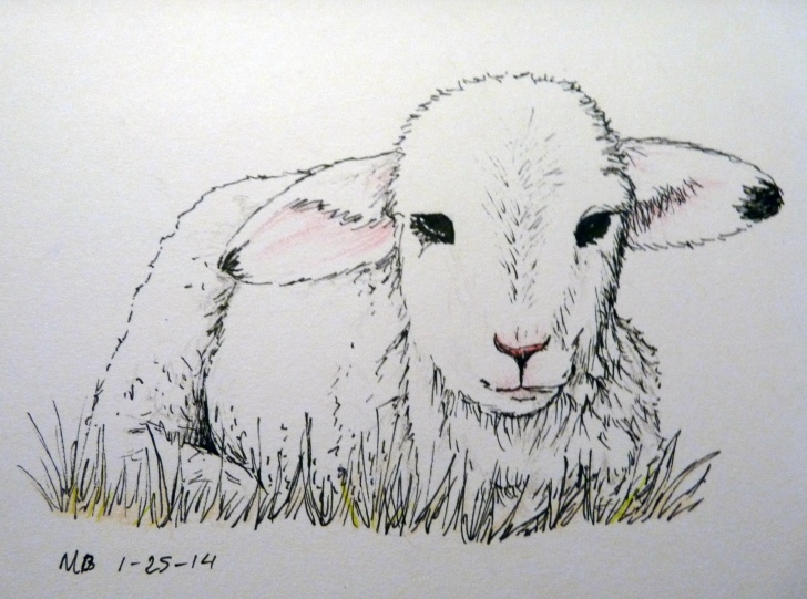 Fascinating Sheep Pencil Drawing Courses Colored Pencil | The Aspiring Illustrator | Page 5 | Lambs & Sheep Images