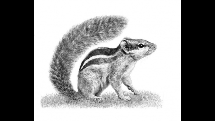 """Fascinating Squirrel Pencil Drawing Techniques How To Draw Running """"squirrel"""" Pencil Drawing Step By Step Image"""