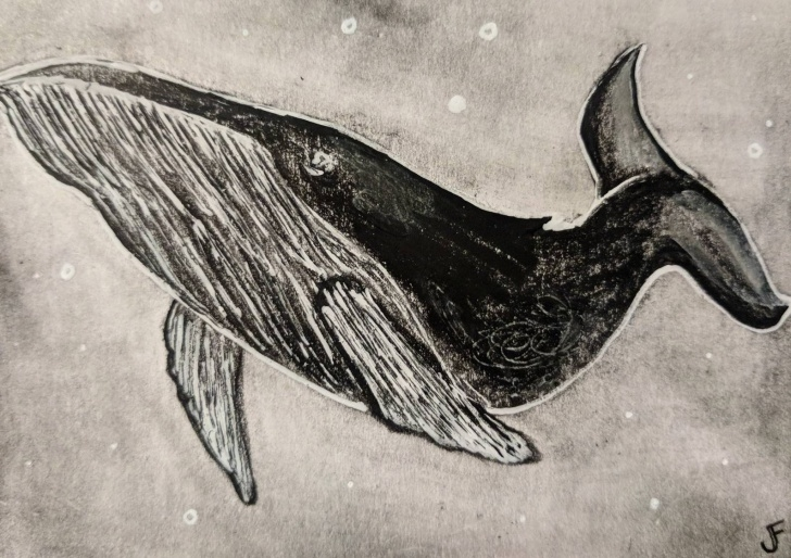 Fascinating Whale Pencil Drawing Tutorial Whale Original Aceo Pencil Drawing Outsider Art Miniature Collectible  Nautical Trading Card Aquatic Ocean Water Animals Sea Illustration Atc Picture