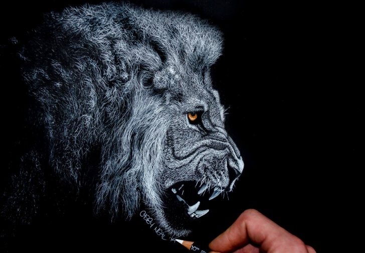 Fascinating White Charcoal Drawings Free White Charcoal Lion Drawing - Album On Imgur Images