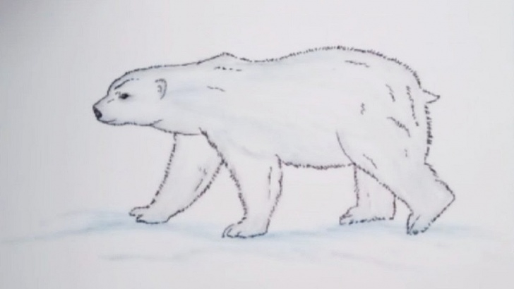Fine Bear Pencil Drawing Tutorials How To Draw A Polar Bear Step By Step With Pencil || Easy Winter Pencil  Drawing Images