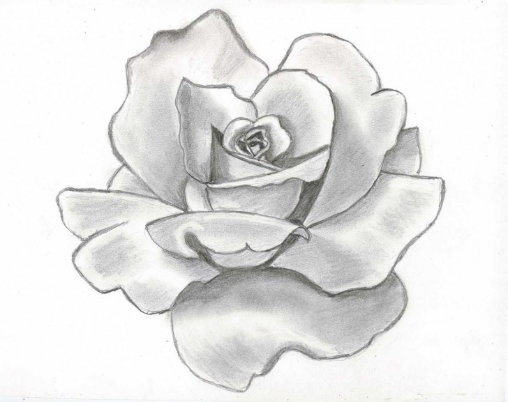 Fine Beautiful Sketches Of Flowers Free Drawing Beautiful Roses | Rose Flower Drawing Wallpapers | Flower Images
