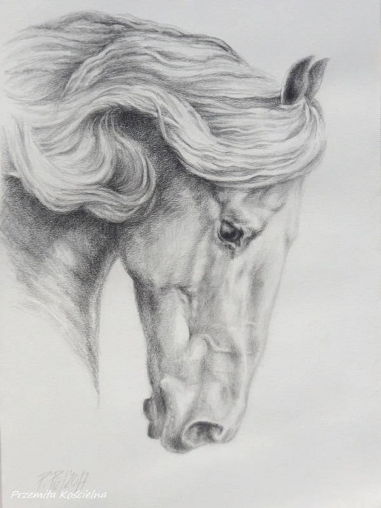 Fine Black Pencil Art Courses Friesian Horse Pencil Drawing On White Paper Hand Drawn Horse Portrait  Black And White Horse Head Equestrian Art Gift For Horse Lover Image