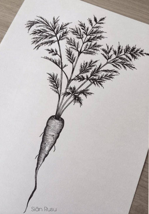Fine Carrot Pencil Drawing Techniques for Beginners Carrot, Drawing, Dotwork, Staedtler, Fineliners Art, Artwork, Artist Picture