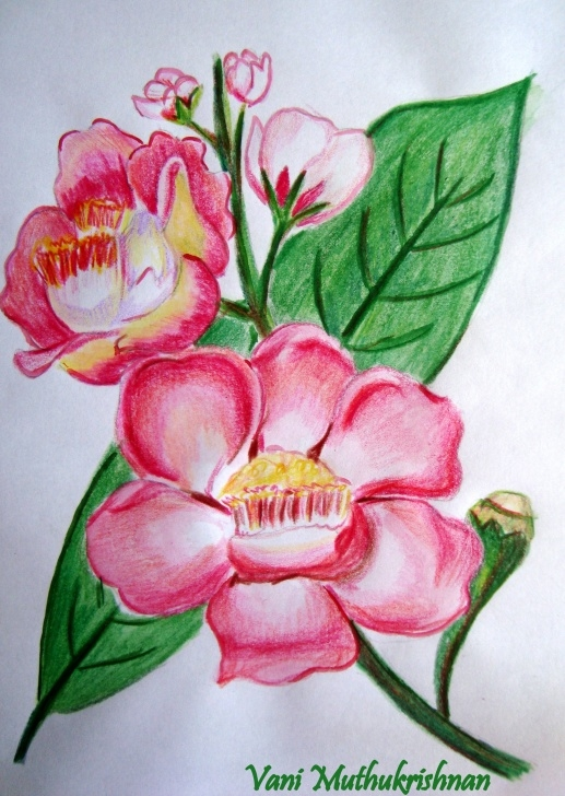 Fine Colour Pencil Shading Flowers Courses Colour Pencil Shading | Mypencilwork | Page 5 Images