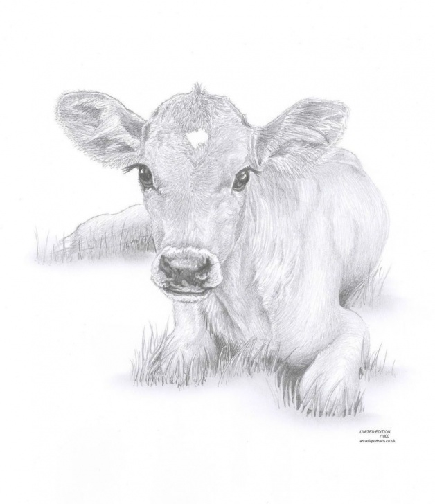 Fine Cow Pencil Drawing Lessons Cow Calf Baby Art Pencil Drawing Invitation | Watercolor | Cow Image