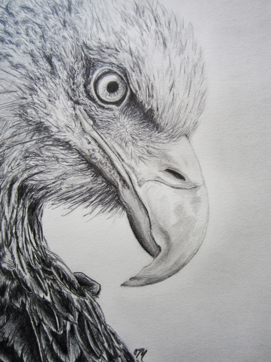 Fine Eagle Pencil Art Ideas Eagle Pencil Drawing | My Creations In 2019 | Pencil Drawings, Eagle Images