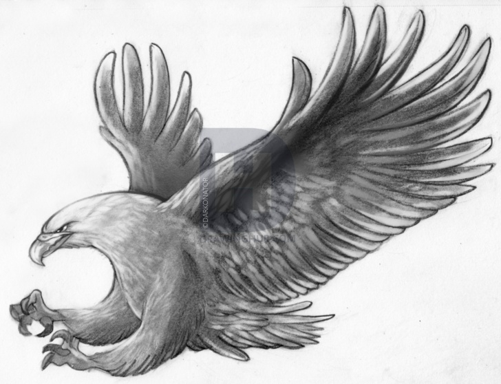 Fine Eagle Pencil Drawing for Beginners How To Sketch An Eagle In Pencil, Draw An Eagle Bird, Step By Step Photo