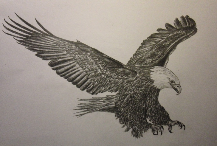 Fine Eagle Pencil Sketch Free Flying Eagle Pencil Sketch At Paintingvalley | Explore Photo