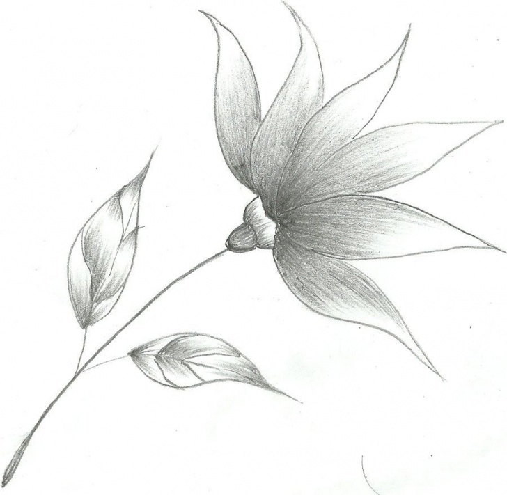 Fine Easy Flower Drawings In Pencil Lessons Flower Drawings | Flower Sketch By ~Mubibuddy On Deviantart | Art In Photo