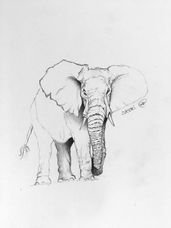 Fine Elephant Pencil Sketch Ideas Elephant - Pencil Sketch | Art Amino Images