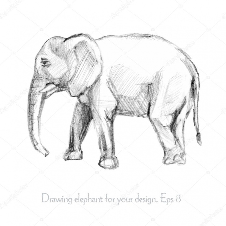 Fine Elephant Pencil Sketch Techniques Pencil Sketch Of An Elephant — Stock Vector © Mirrastock #65867233 Photo