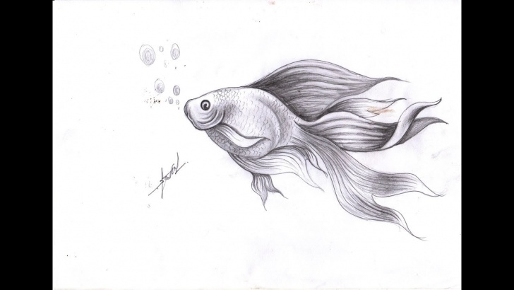 Fine Fish Pencil Sketch Easy How To Draw Cute Fish - Draw Fish By Pencil - Samut Ctc Art Image
